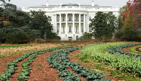 Iron Chef Marc Forgione 's White House Garden Challenge